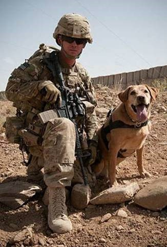 army-ranger-dog